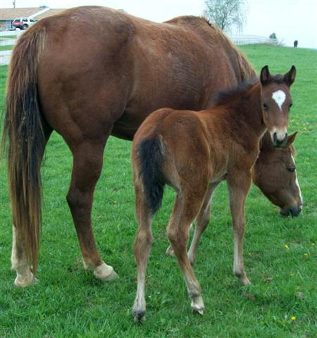 Baby Horse Foal