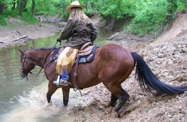 Horse Training - Horse crossing creek