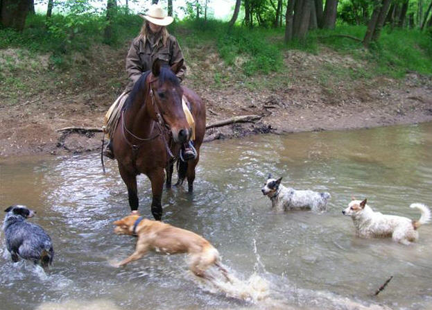 Horse Training - Horse in Creek