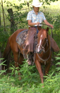 aqha horse for sale