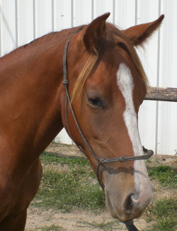 cutting horse aqha filly mare