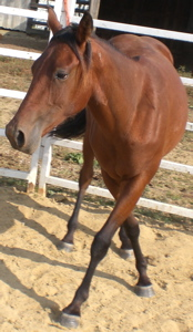 ranch horse mare