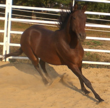 aqha peppy san badger