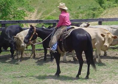 Black Horse NCHA NRHA Futurity prospect quarter horse training