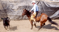 cutting team penning mare for sale