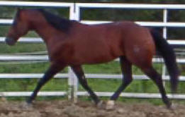 Dry Doc Peppy San Badger Doc Bar Stallion Horses for sale