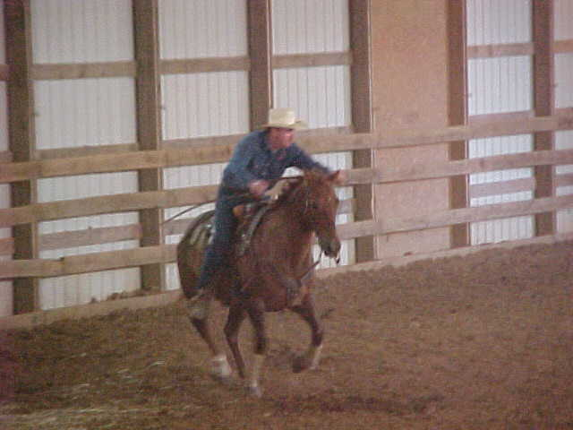 HorseTrainer - Mark Carter natural horsemanship training