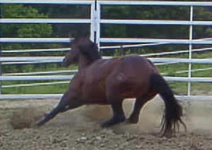 NCHA AQHA Quarter Horse Stallion breeding mare broodmares
