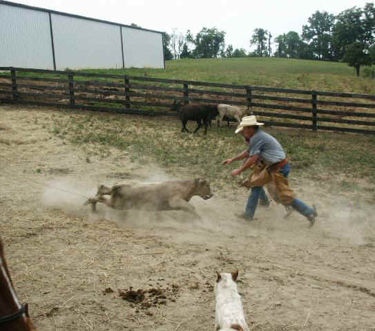 Roping calves 2