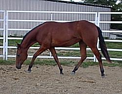 AQHA quarter horse cowhorses for sale